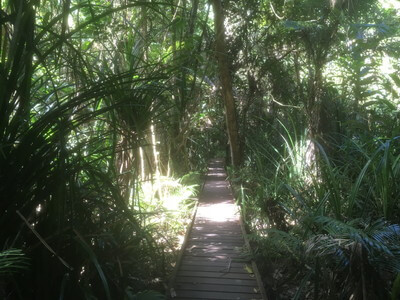 Rainforest Boardwalk