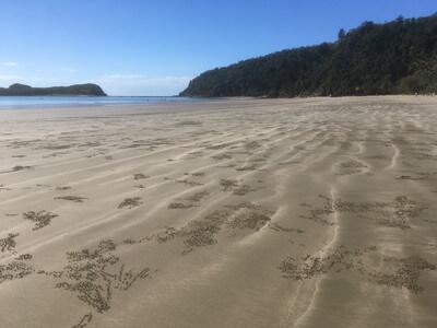 カンガルーが来るビーチ