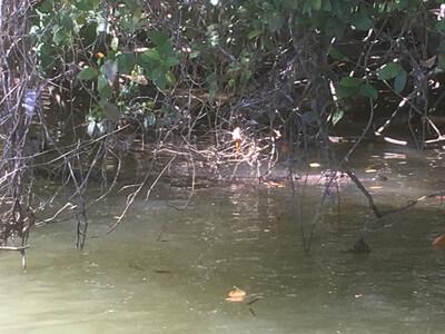 ディンツリー川のリバークルーズ