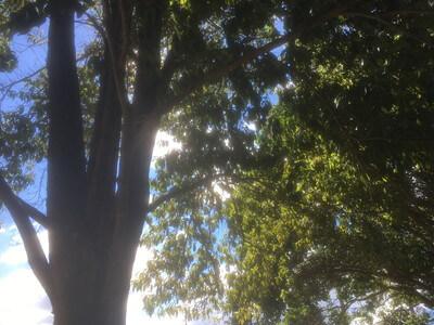 ブリスベンボタニック ガーデン・マウントクーサ