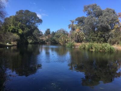 ロイヤルボタニックガーデンの池