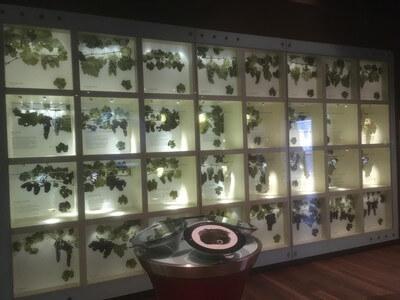 オプショナル・ワインセンター・ オブ・オーストラリア