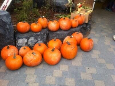 キャンモアのかぼちゃ