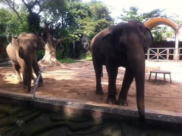 ホーチミンの動植物園