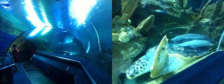 クアラルンプールのKLCC水族館